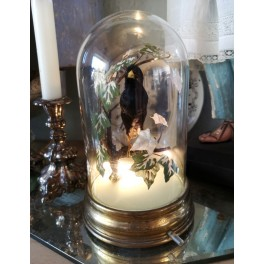 Fransk Lampe Glasglobe m. Udstoppet Fugl [20cm]