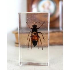 Insekt i akrylplade [7,5x4x2cm] Flyvende Insekt