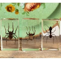 1-3 - Insekter i akrylplade [Taxidermy] PR. STK