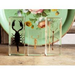 4-6 - Insekter i akrylplade [Taxidermy] PR. STK
