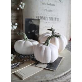 Græskar Pumpkin  Pr stk ass